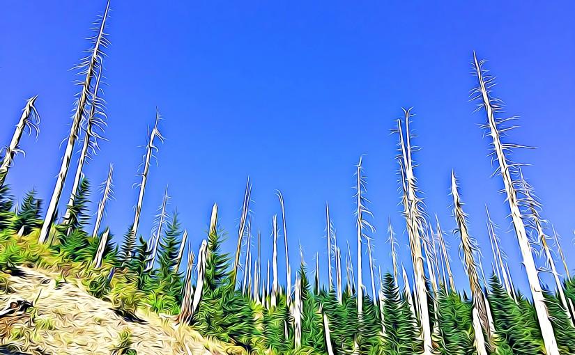 Mt. St. Helens,WA